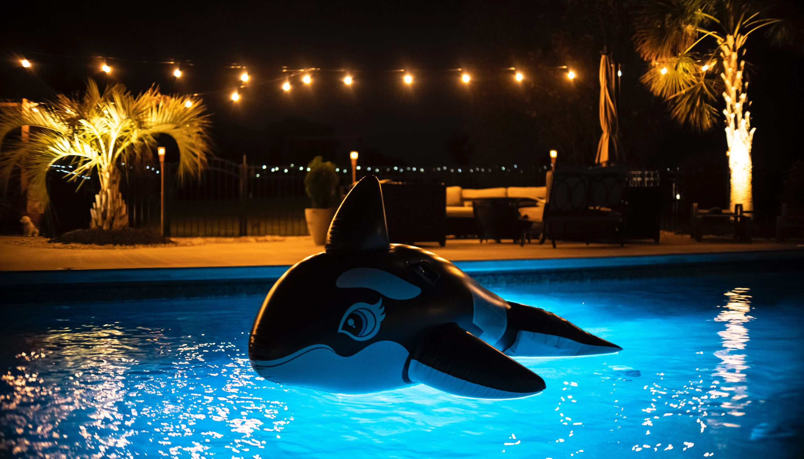 inflatable killer whale / orca in a pool.