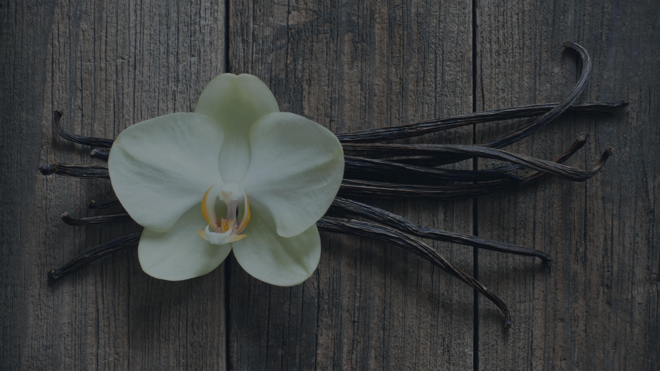 Why we say no to vanilla | Kraken Marketing